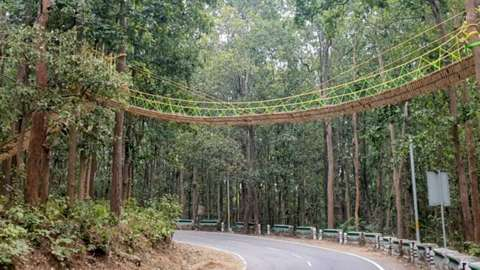 Reptile bridge strung up over a road