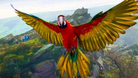 Motley the Macaw