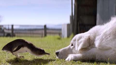 Penguin and sheepdog