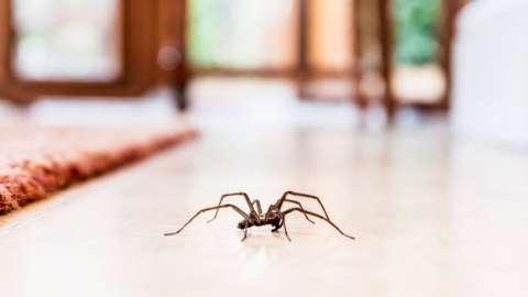 Spider on a tiled floor