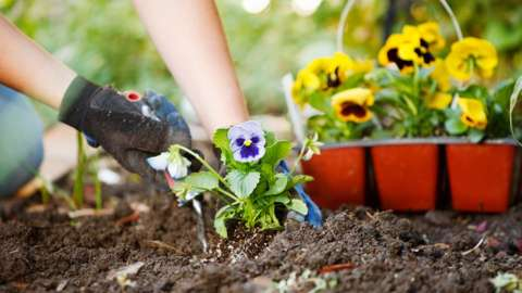 Planting flowers in soil beds