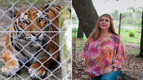 Carole Baskin and tiger