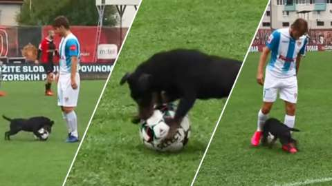 Dog gets onto the pitch during a Bosnian Premier League match