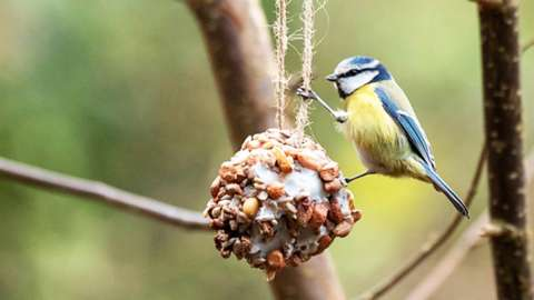 A bird eating from a bird feeder