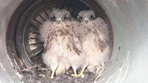 The birds were discovered in the aircraft's exhaust