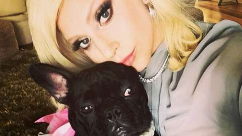 Lady Gaga with one of her bulldogs