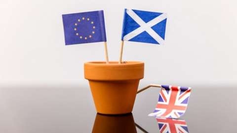 Plant pot with EU, Scotland and GB flags