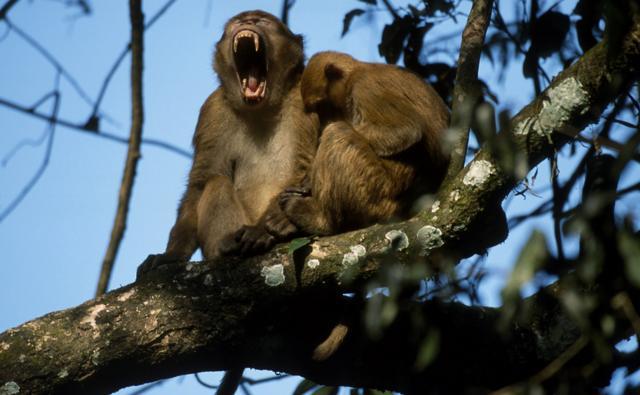 tiny monkeys
