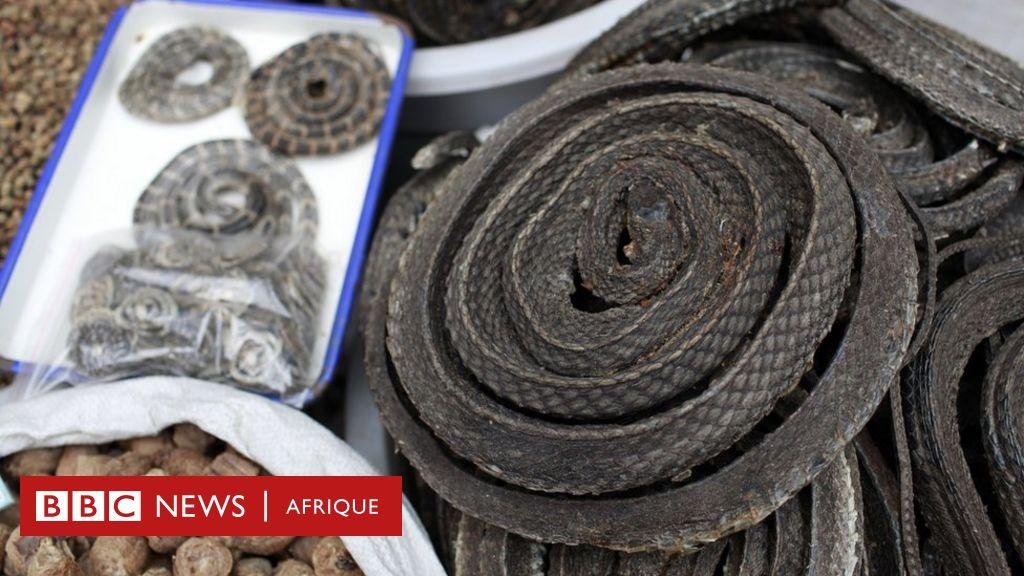 Coronavirus en Chine: vient des serpents de l'alimentation chinoise?