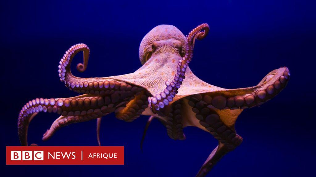 10 faits étonnants sur les pieuvres que vous ne connaissiez peut-être pas