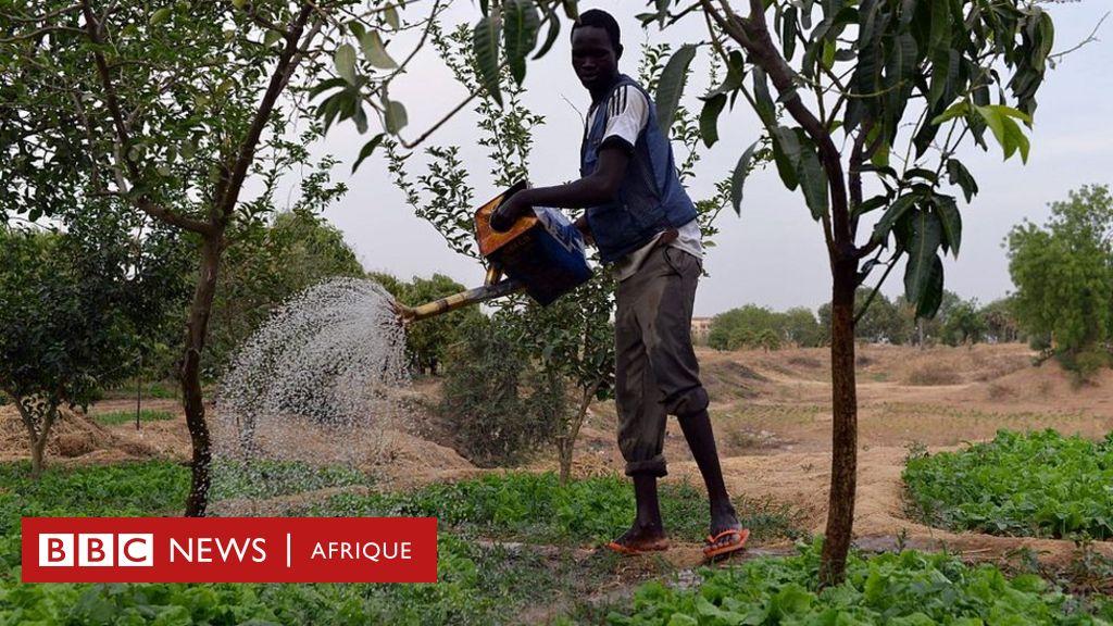 Ayabootcam forme de jeunes entrepreneurs tchadiens à lutter contre la famine