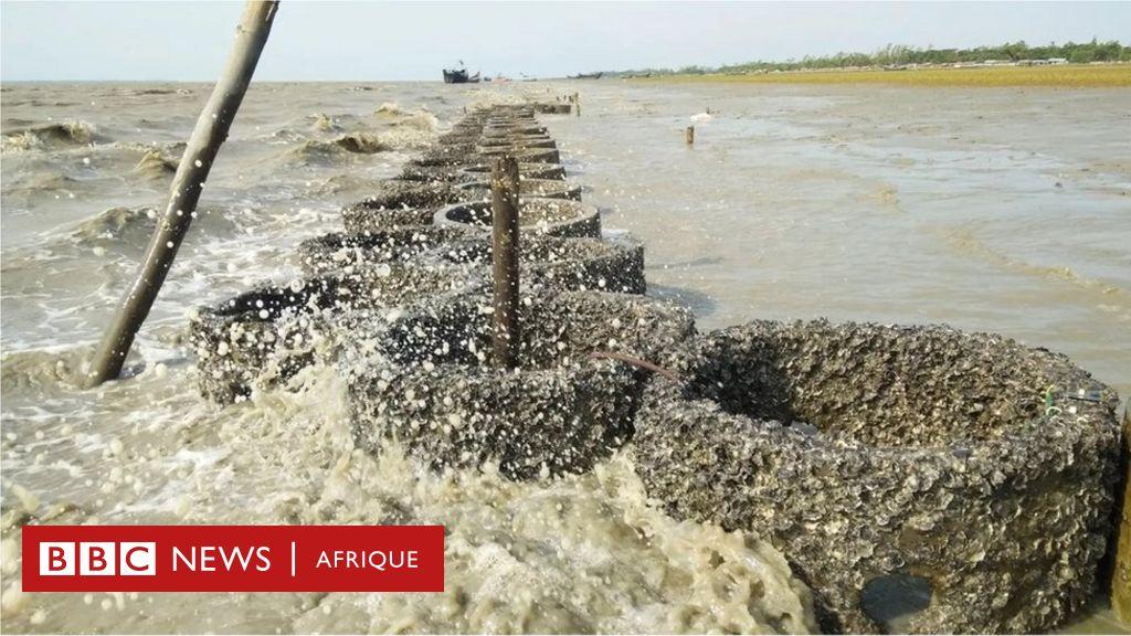 L'improbable protection contre la montée des eaux du Bangladesh - BBC News Afrique