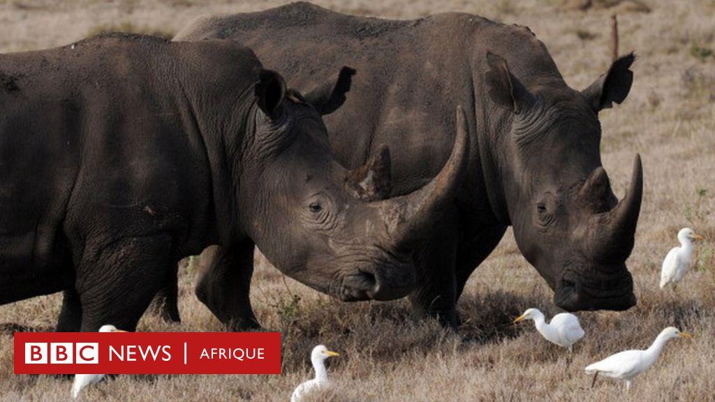 17 rhinocéros noirs sud-africains au Malawi