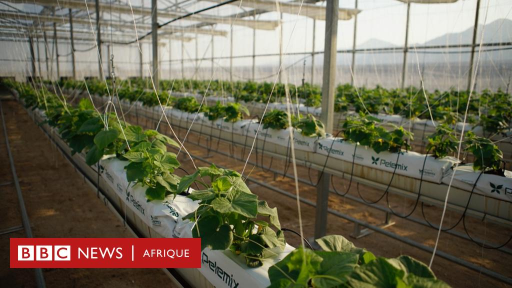 Pourquoi notre alimentation doit utiliser moins d'eau? - BBC News Afrique