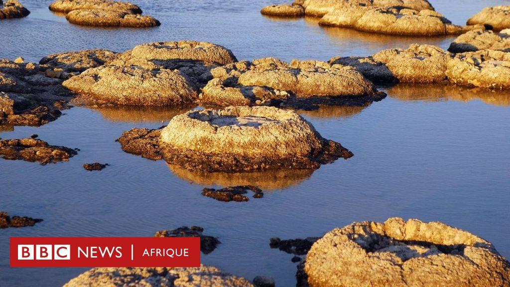 Les stromatolithes : les plus anciennes formes de vie sur terre - BBC Afrique
