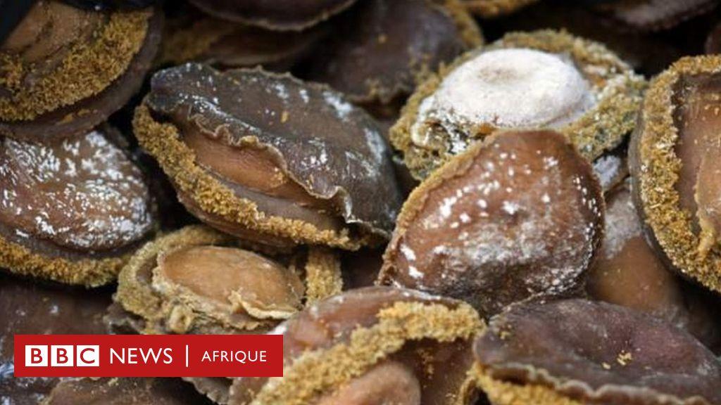 Un crustacé en voie d'extinction en Afrique du Sud