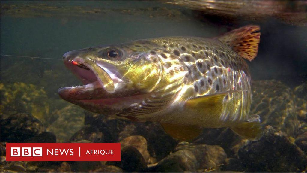 Pourquoi les poissons deviennent dépendants des drogues