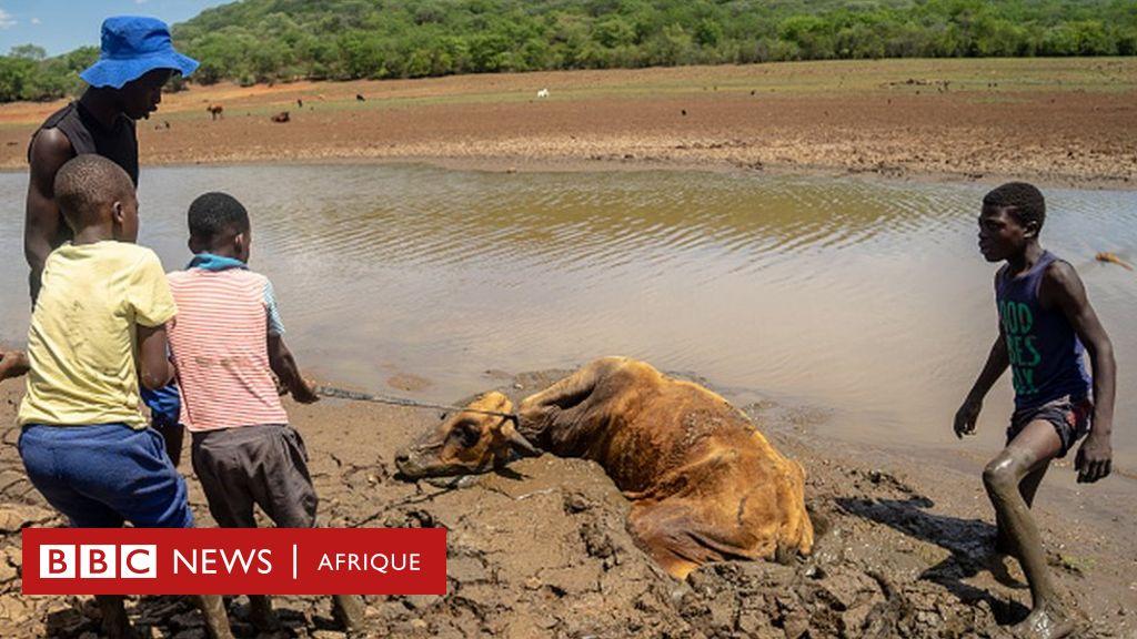 Besoin d'une aide alimentaire urgente pour 4 millions d'enfants zimbabwéens