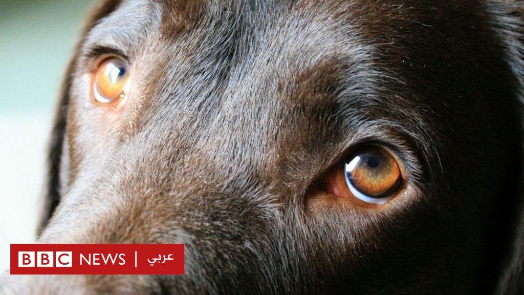 دراسة: الكلاب طورّت نظرات عيونها لتستميل مشاعر البشر