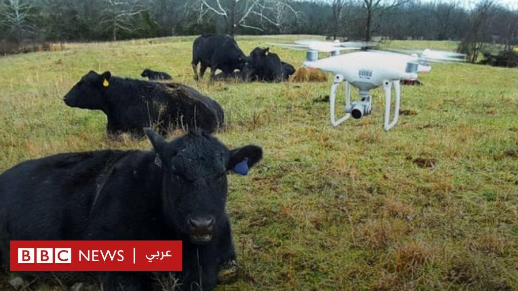 كيف تستخدم الولايات المتحدة طائرات مسيرة لمتابعة ورعاية حيوانات المزارع؟