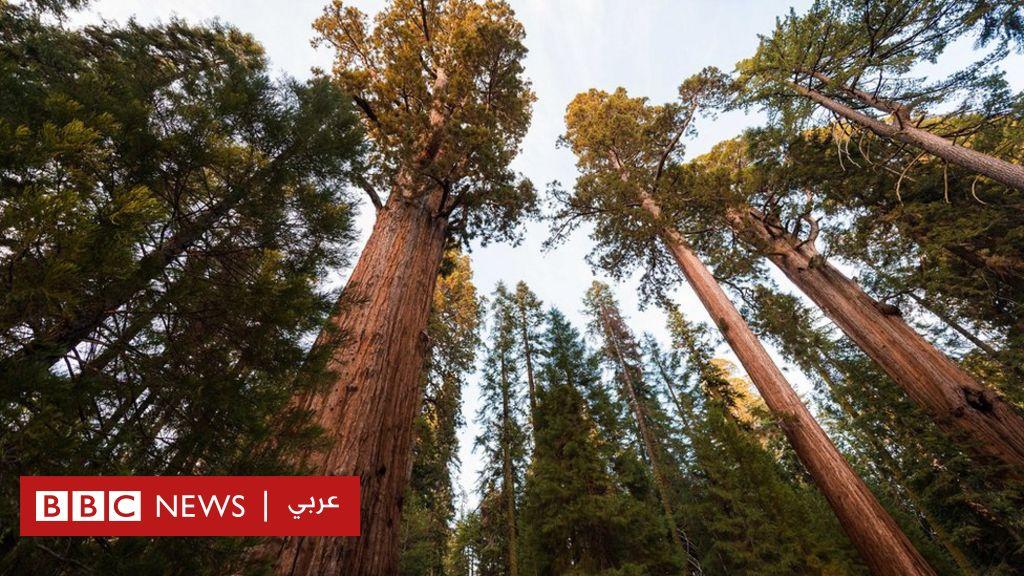 التغير المناخي: النشاط البشري يجعل الغابات مصدرا لانبعاثات الكربون