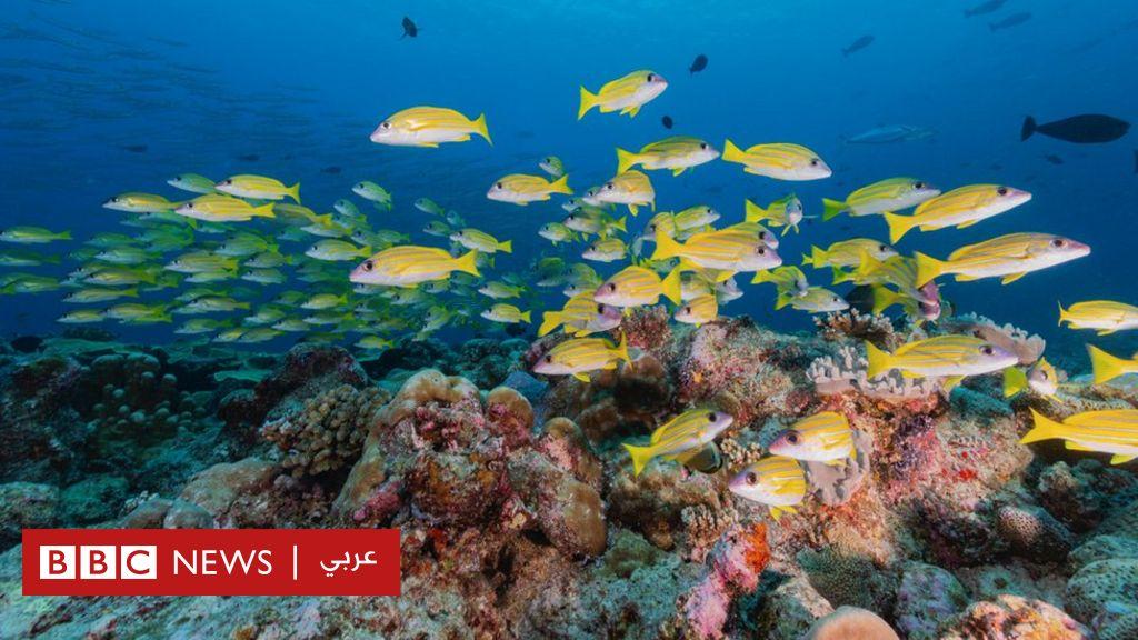 """فيروس كورونا: """"عام هدوء"""" في المحيطات بحسب علماء دراسات الأصوات فيها"""