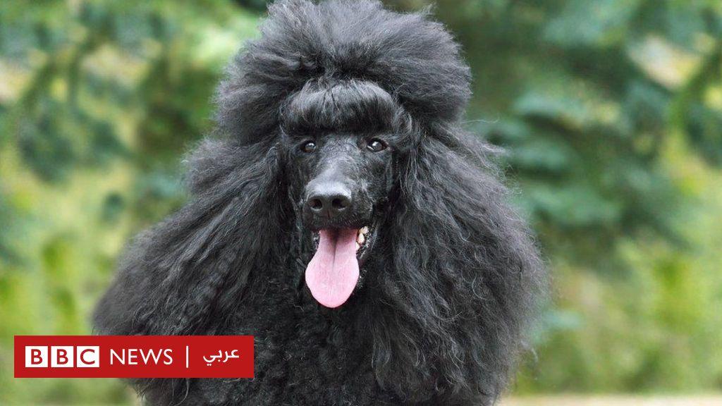"""كلب يقود الشرطة إلى القبض على صاحبته الألمانية بعد عام من """"وفاتها"""""""