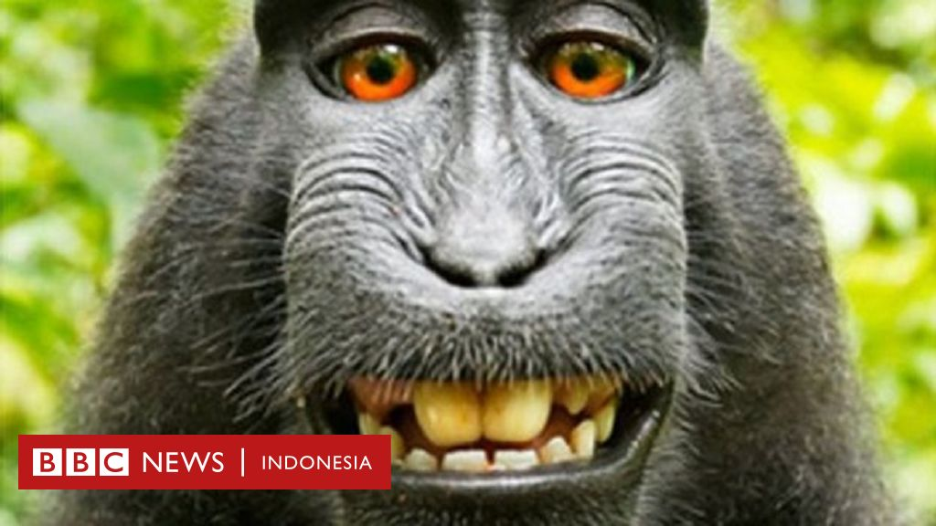 Fotografer Menangkan Sengketa Foto Selfie Monyet Di Hutan