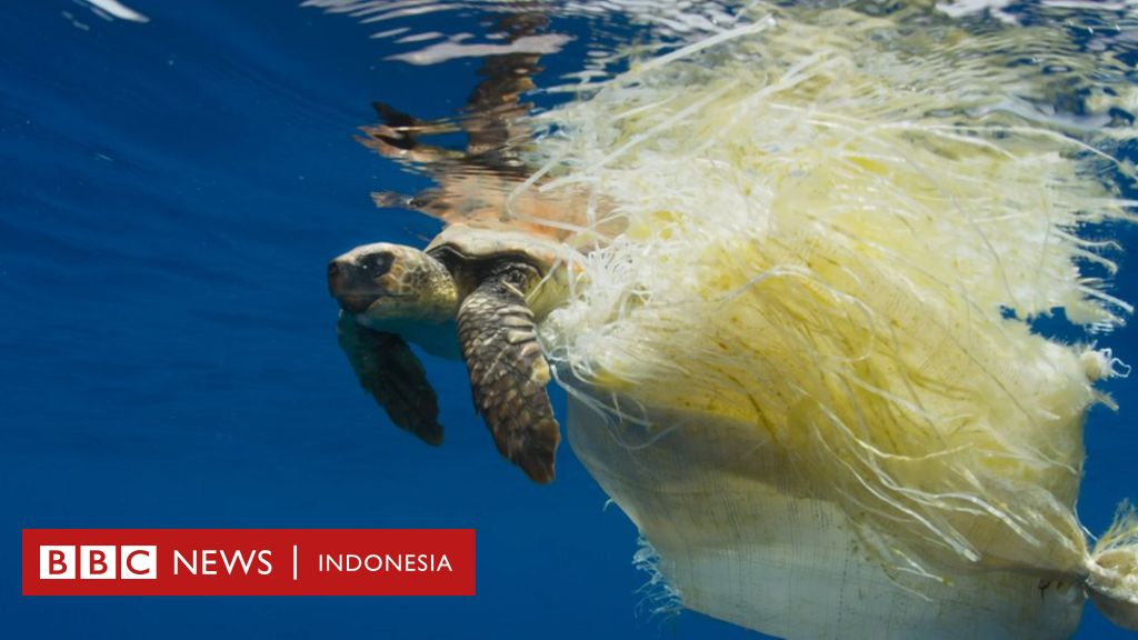 Bagaimana Plastik Membunuh Berbagai Ikan Hewan Hewan Laut Juga