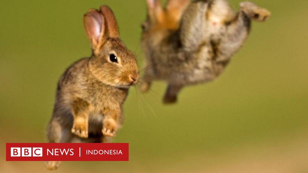 Hewan Hewan Dengan Keturunan Paling Banyak Bbc News Indonesia