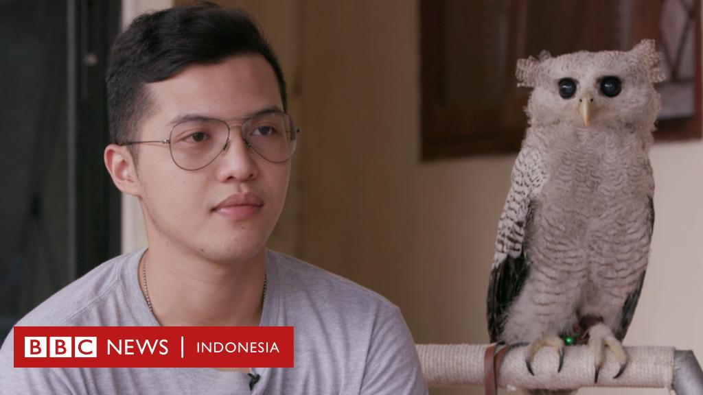 Bagaimana Harry Potter Jadi Kutukan Bagi Burung Hantu Indonesia