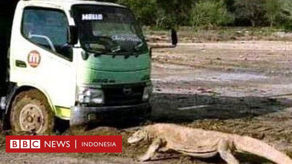 'Jurassic Park Komodo' di Rinca: 'Harap tenang', namun ...