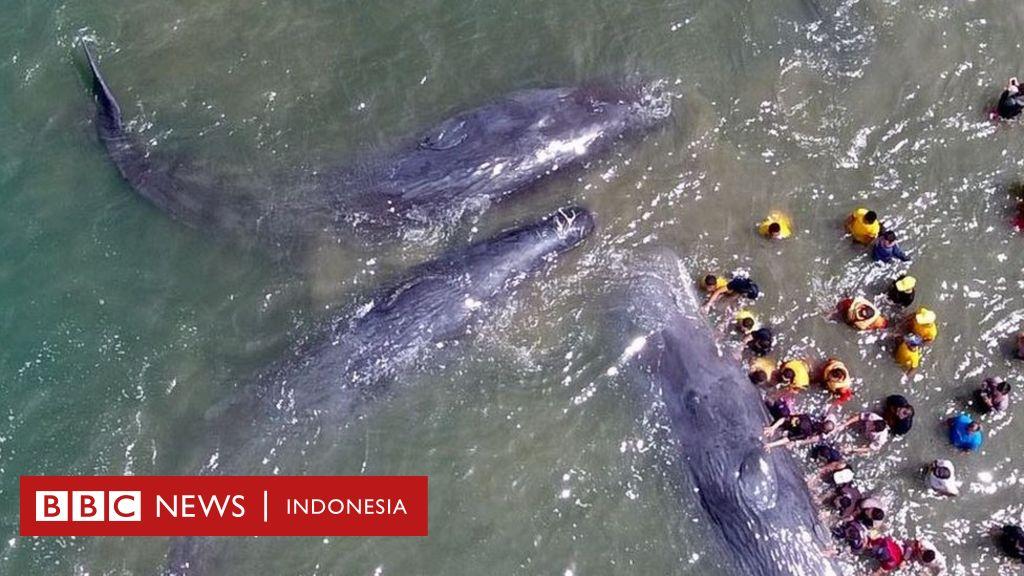 26+ Hewan laut langkah terbaru
