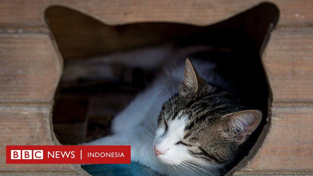 Unduh 98+  Gambar Kucing Bersuara Anggora Terlihat Keren Gratis