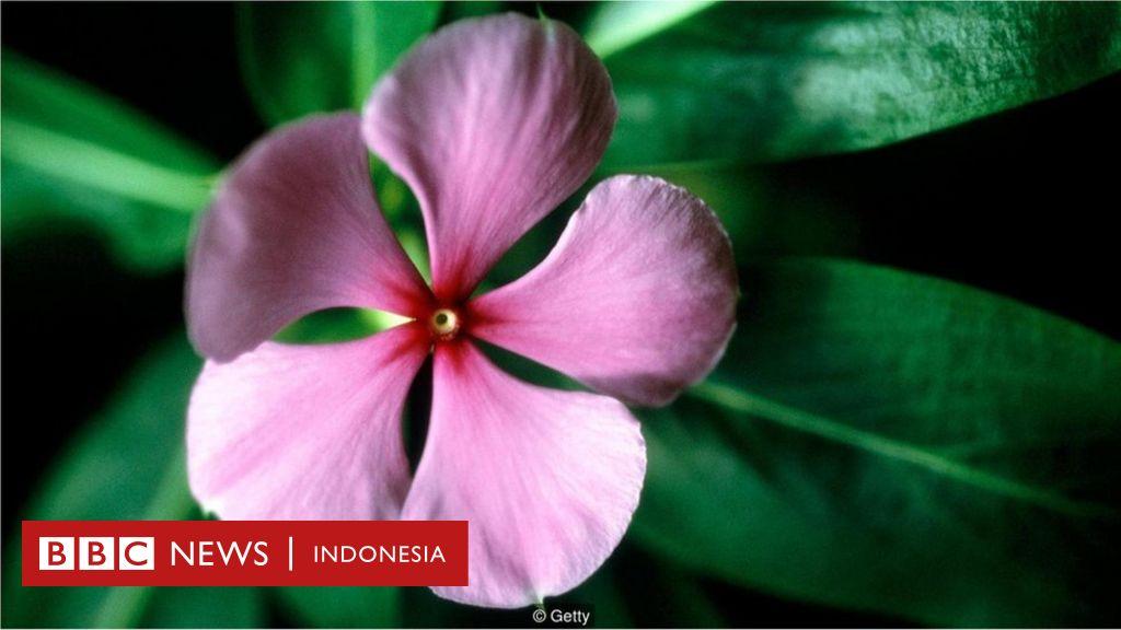 Buta Flora Kenapa Kita Perlu Lebih Akrab Dengan Tumbuhan Bbc News Indonesia