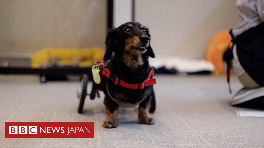 高まる需要、日本のペット向け介護ホームを訪ねる