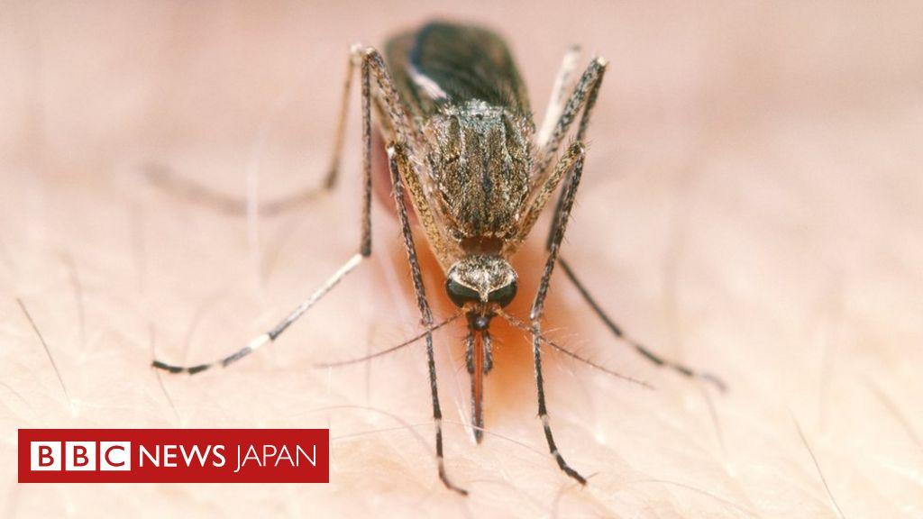 蚊 新型 コロナ ウイルス