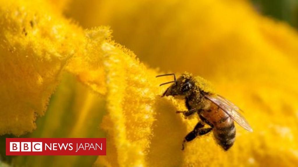 人類のせいで「動植物100万種が絶滅危機」=国連主催会合 - BBCニュース