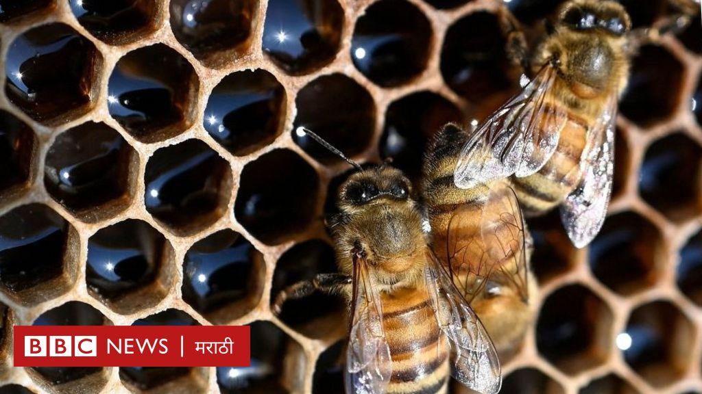 घरात मधमाश्यांचं भलंमोठं पोळं, तरीही ती बिनधास्त - पाहा व्हीडिओ