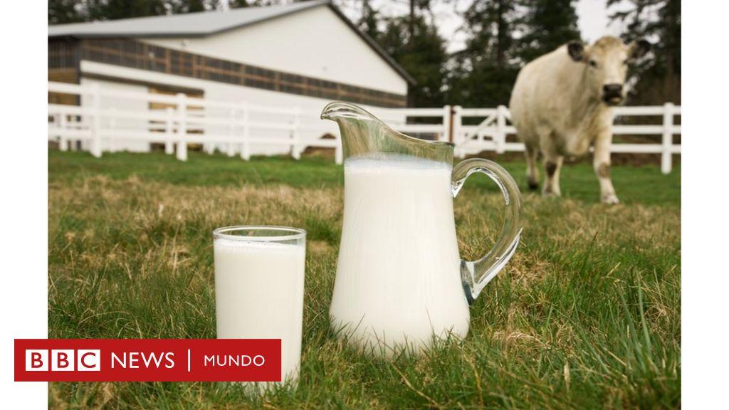 Leche de vaca organica