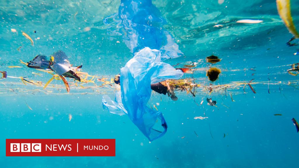 El paraíso turístico en el que hay 7 veces más plástico que peces - BBC News Mundo