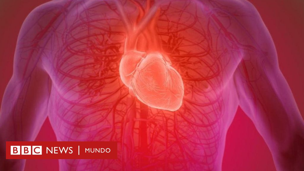 Arterias corazón del pequeñas alrededor