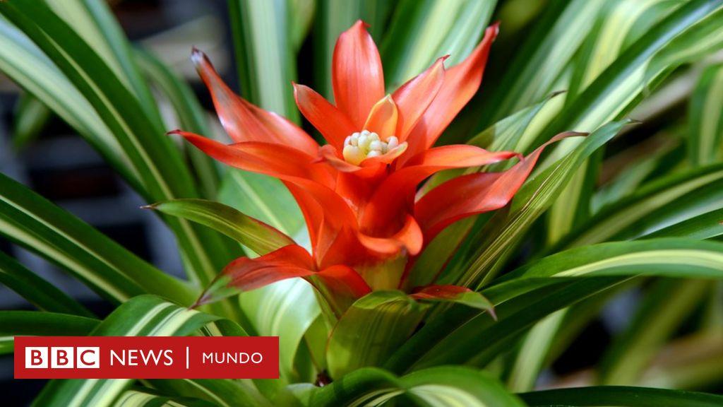 Baratas y f ciles de conseguir las sorprendentes plantas for Plantas de exterior baratas