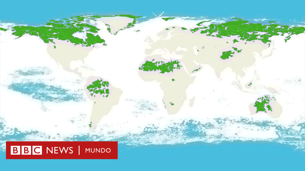 Los 5 Países Que Concentran El 70 De Los Ecosistemas Intactos Del Mundo Bbc News Mundo