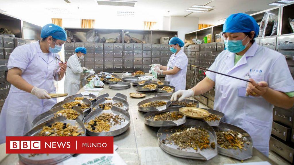Coronavirus: cómo China está impulsando el uso de su medicina tradicional ante la pandemia (y qué se sabe de su eficacia) - BBC News Mundo