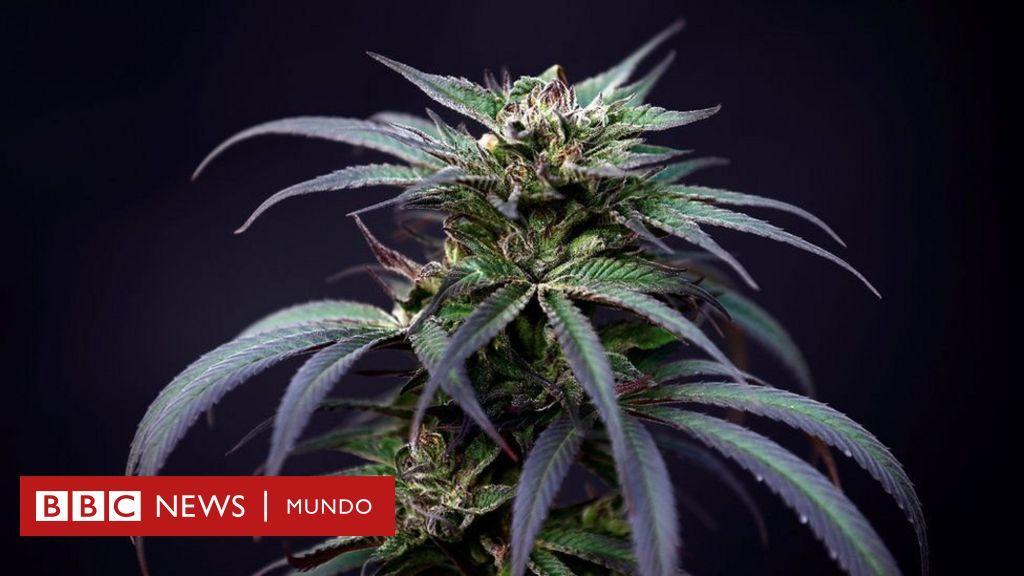 marihuana invirtiendo nuevo bitcoin la ventaja de la opción binaria