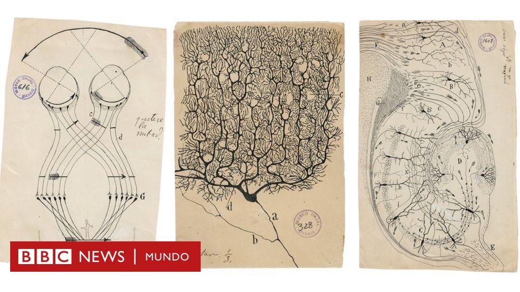 Santiago Ramón y Cajal y los dibujos que revolucionaron hace un ...