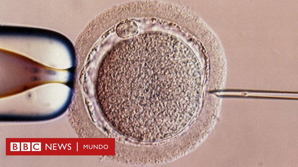 a partir de cuando se fecunda el ovulo