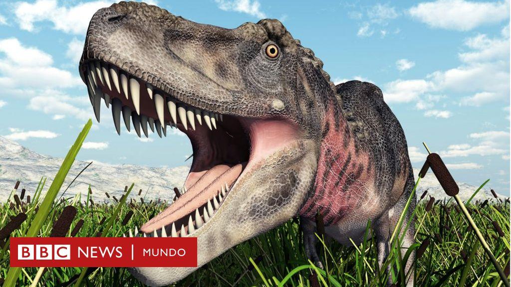 Como Seria El Mundo Si Los Dinosaurios No Se Hubiesen Extinguido Bbc News Mundo Información y contratación kumara@kumaraeventos.es dinosaurios para eventos. los dinosaurios no