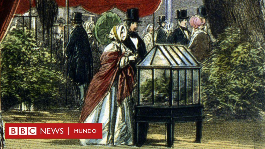 Cómo unas ingeniosas cajas de cristal se volvieron poderosas armas en manos de colonizadores británicos